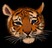 gallerie1 Tiger